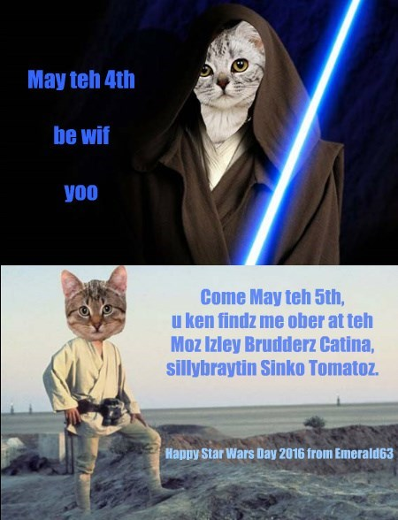 may star wars caption Cats - 8794366720