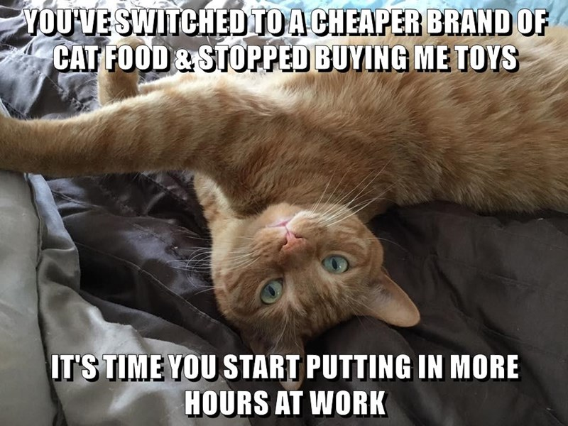 work,caption,Cats,cheap