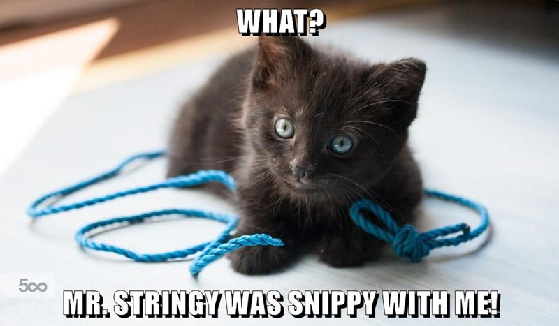 WHAT?   MR. STRINGY WAS SNIPPY WITH ME!