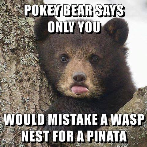 POKEY BEAR SAYS                ONLY YOU  WOULD MISTAKE A WASP NEST FOR A PINATA
