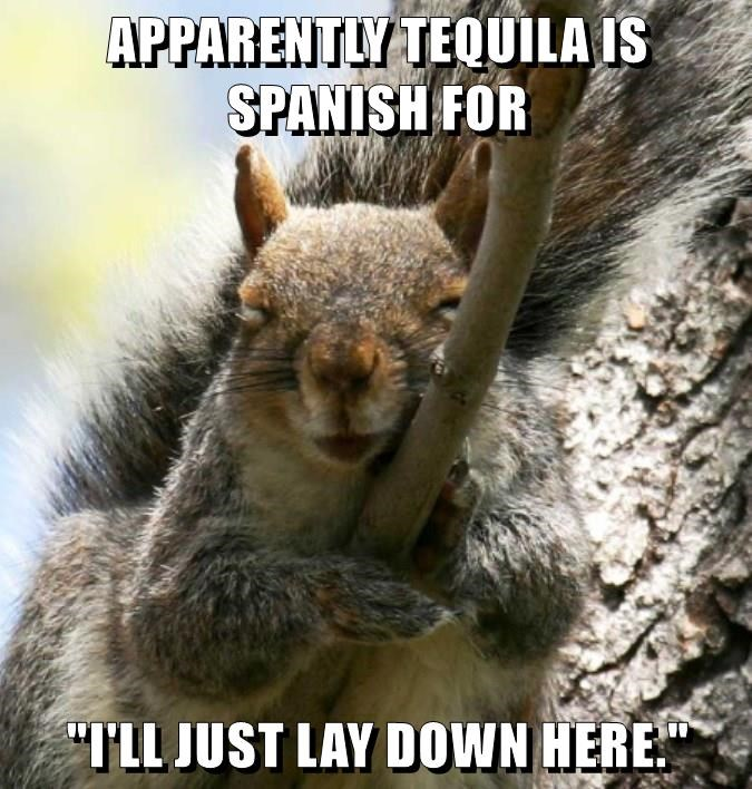 """APPARENTLY TEQUILA IS SPANISH FOR  """"I'LL JUST LAY DOWN HERE."""""""