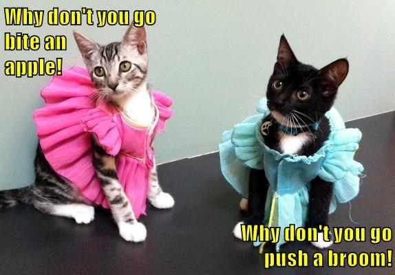 animals princess caption Cats - 8794451712