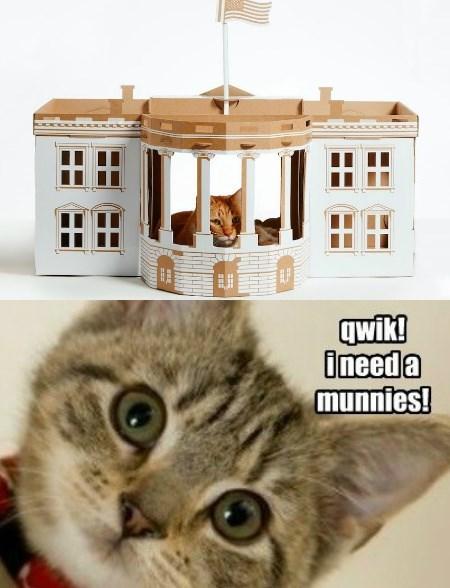 monies White house caption Cats - 8794454528