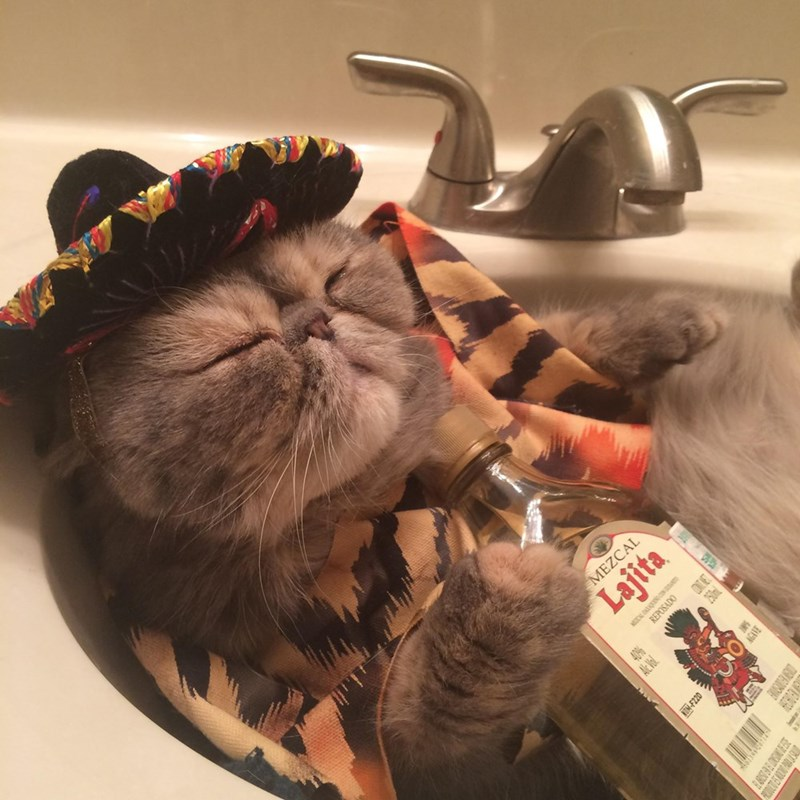 not everyone can handle cinco de meow
