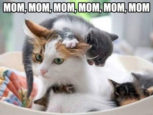 Cat - MOM,MOM,MOM,MOM, MOM,MOM