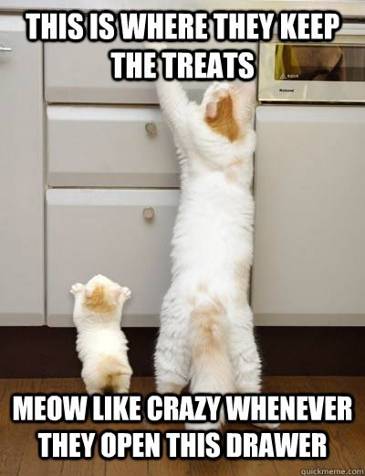Photo caption - THISIS WHERE THEY KEEP THE TREATS MEOW LIKE CRAZY WHENEVER THEY OPEN THIS DRAWER quickmeme.com