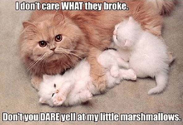 Cat - Odont care WHAT they broke. Don'tyou DARE yellat my little marshmallows.