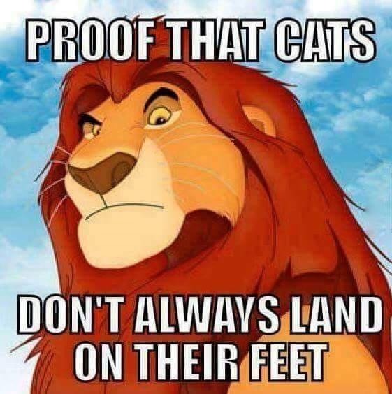 lion-king-mufasa-disney-cats-land-feet-sometimes