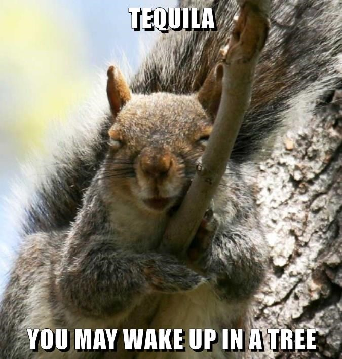 TEQUILA  YOU MAY WAKE UP IN A TREE