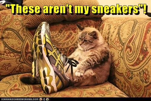 animals cat caption sneakers - 8794640384