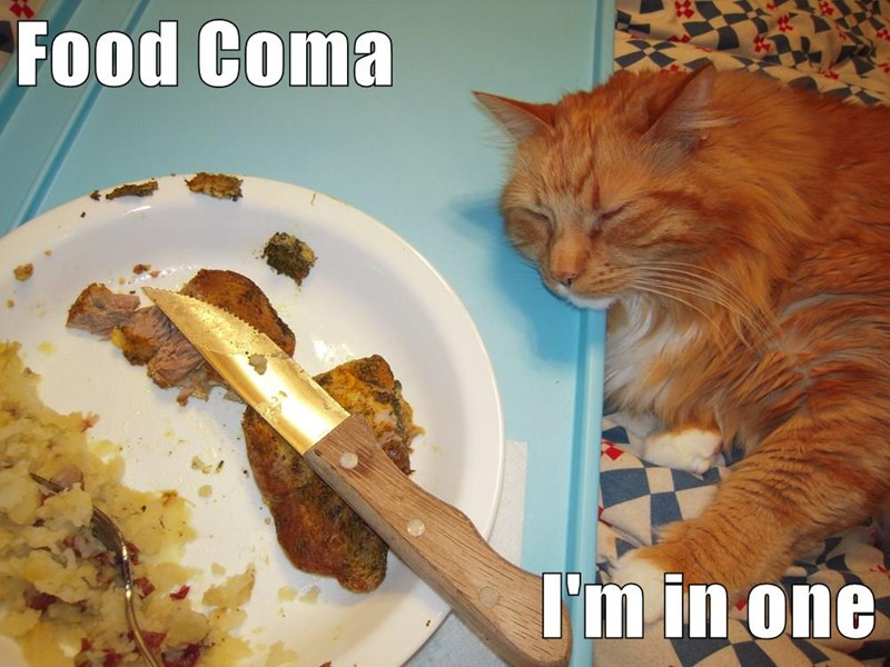 animals coma food caption Cats - 8794720512