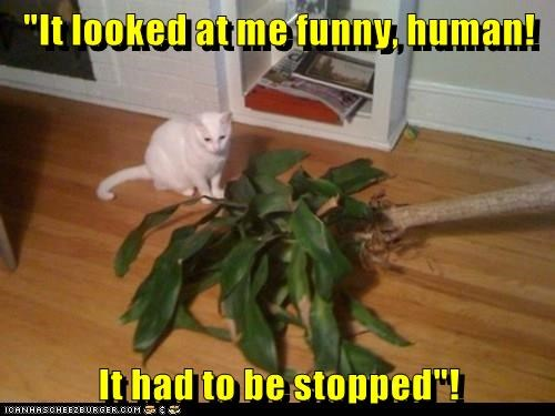 cat,caption,plant