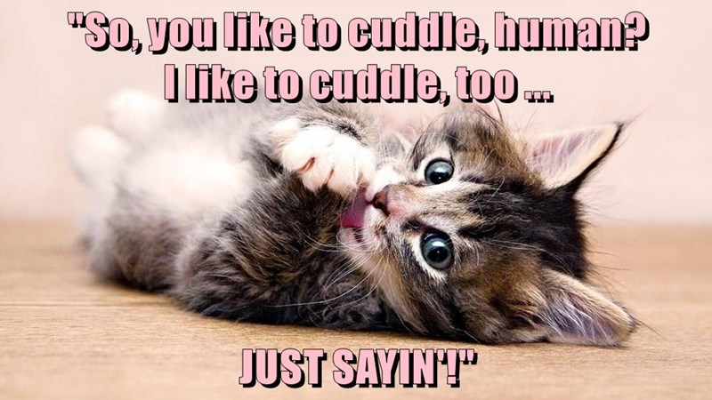 animals cat cuddle human caption - 8794771968