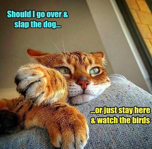 cat birds watch slap caption - 8794772224