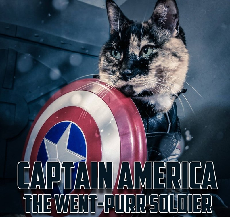 captain america cat