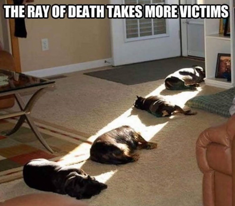victims dogs light sun caption