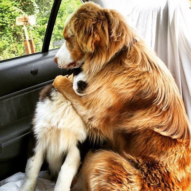 two dogs hugging and comforting each in the backseat of a car