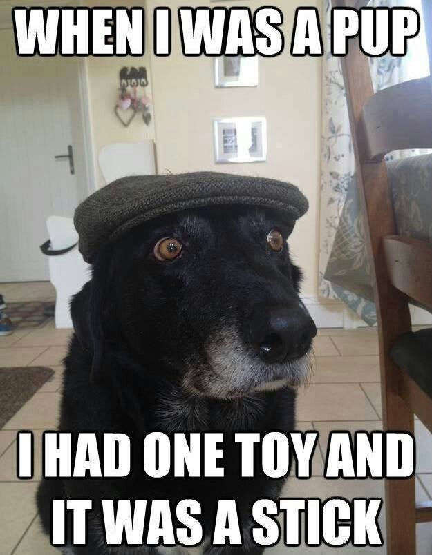 stick,old,dogs,back,caption,hat