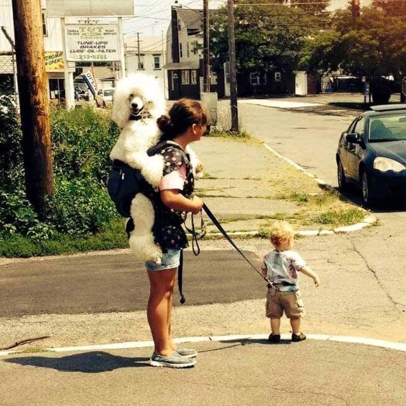 parallel universe dogs parenting When You Walk out the Door and Discover You're in a Parallel Universe