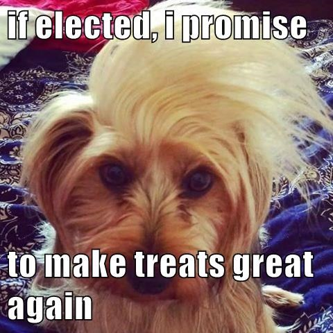 dogs,treats,donald trump,great,caption
