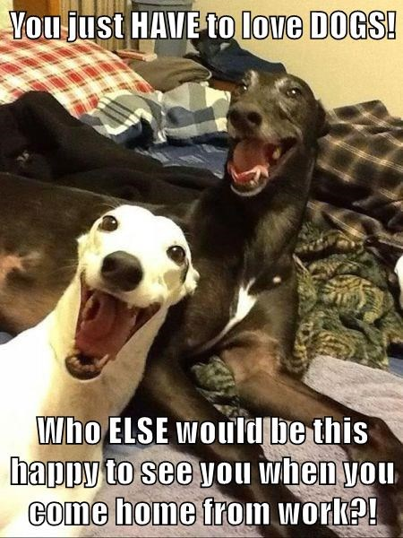 animals dogs love happy caption - 8795284480