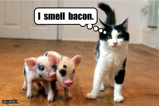 I  smell  bacon.