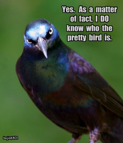 Yes.   As  a  matter  of  fact,  I  DO  know  who  the  pretty  bird  is.