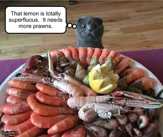 seafood chef caption Cats