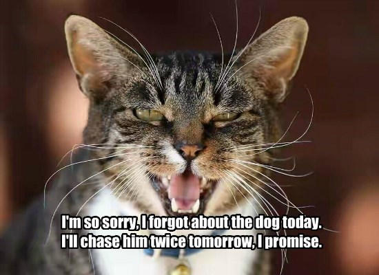 cat dogs chase sorry caption forgot - 8795343104