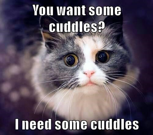 animals cat want cuddles caption need - 8795367424
