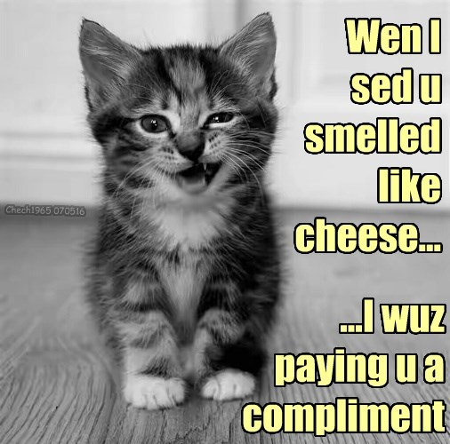 like compliment smell cheese kitten human caption - 8795385088
