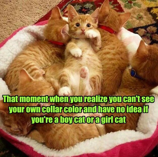 litterbox,boy,cat,caption,girl
