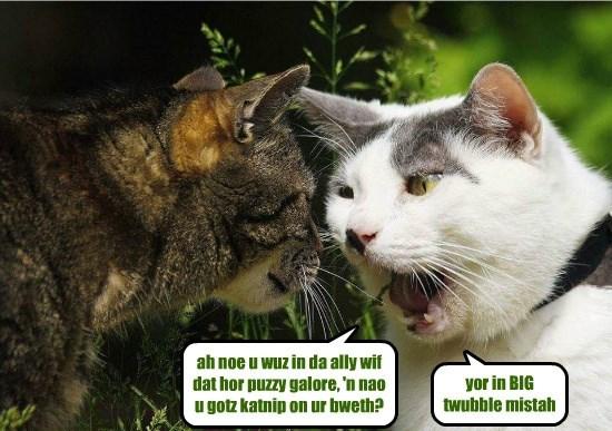 catnip pussy galore breath caption Cats - 8795477248