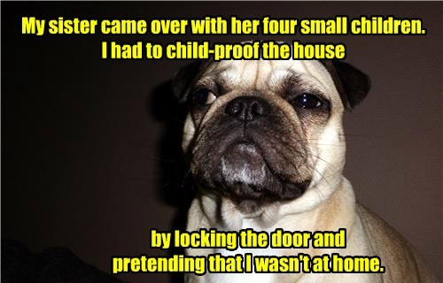 dogs pug caption home - 8795569664
