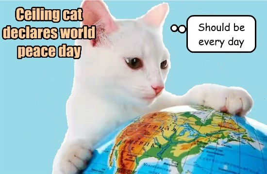 world peace ceiling cat caption Cats - 8795587072