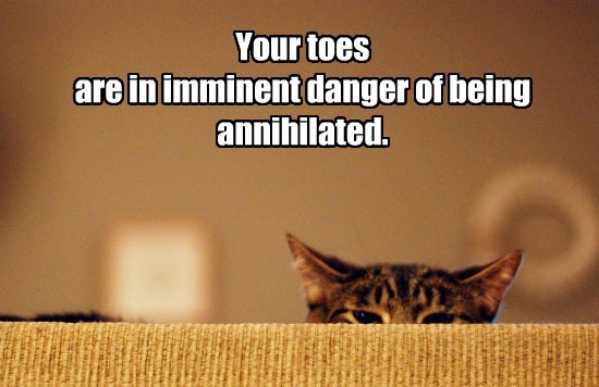 toes danger caption Cats