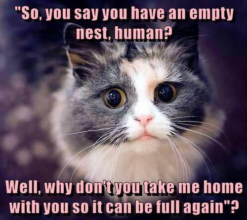 """So, you say you have an empty nest, human? Well, why don't you take me home with you so it can be full again""?"