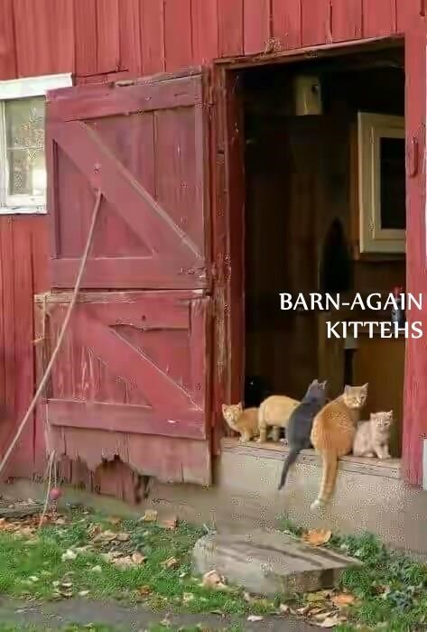 BARN-AGAIN                                                                 KITTEHS