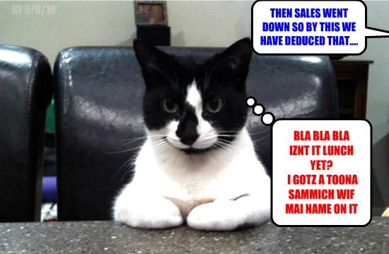 cat tuna meeting lunch sandwich sales caption - 8795686400