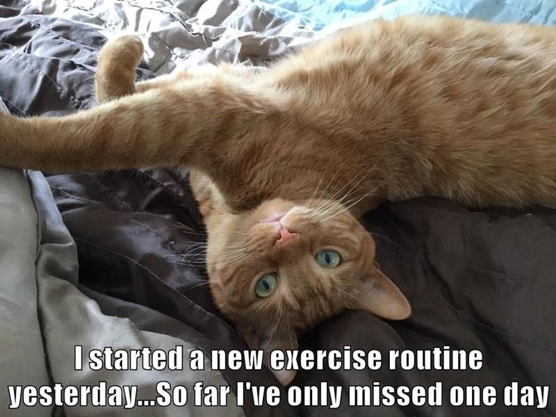 animals cat routine caption lazy exercise - 8795691520