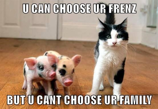 animals cat pig friends family caption - 8795712000