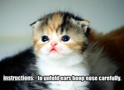 boop ears kitten nose caption Cats - 8795769856