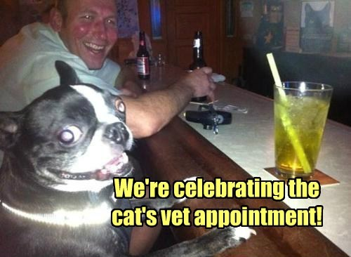 dogs,appointment,celebrating,vet,caption,Cats
