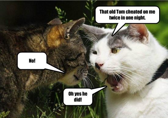 cat twice tom caption cheated - 8795863296