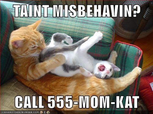 animals - 8795884288