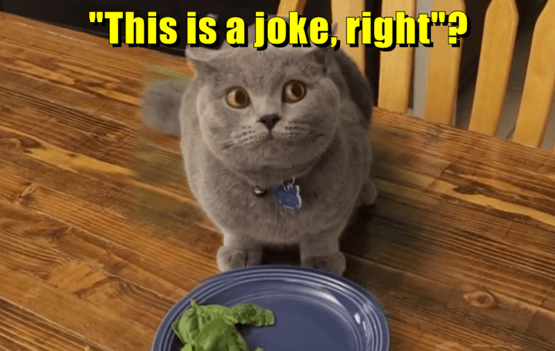 animals cat caption joke spinach