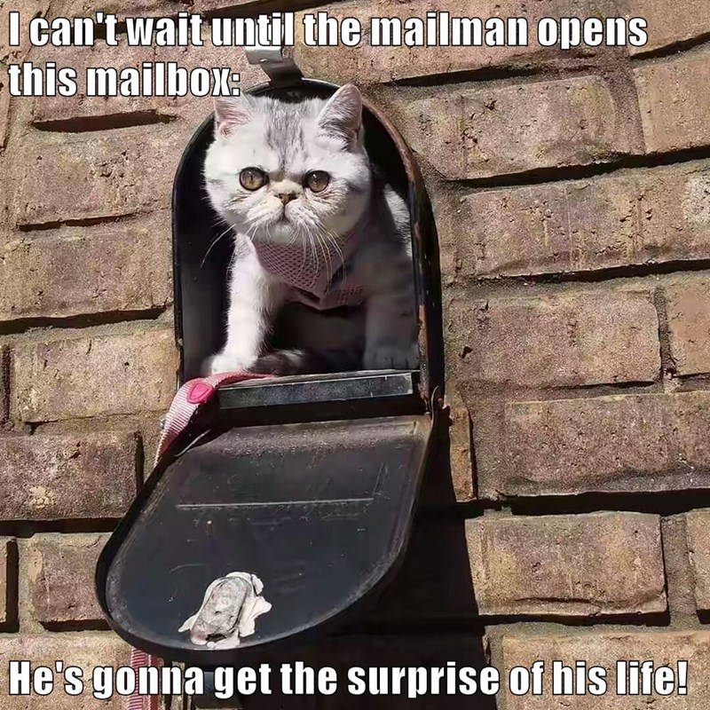 animals surprise caption Cats mail - 8795926784