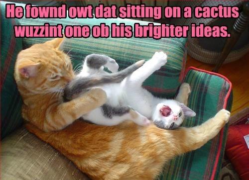 idea cat wasnt cactus bright caption sitting - 8795932160