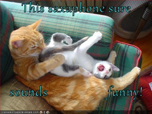 animals cat saxophone sounds caption funny - 8795934720
