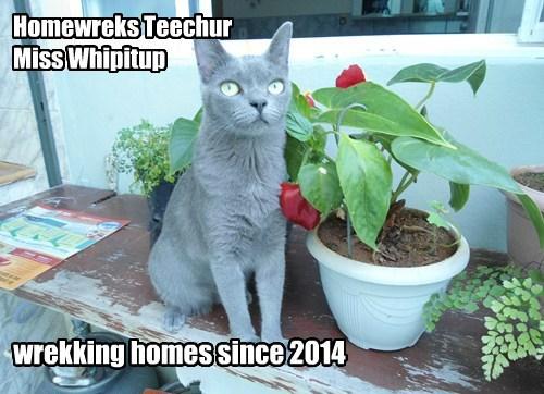 Homewreks Teechur Miss Whipitup wrekking homes since 2014